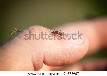 mosquitos on a human hand - stock photo