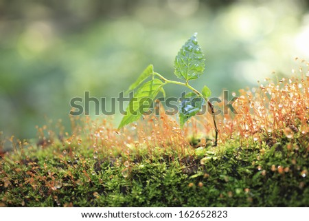 Moss and a sprout - stock photo