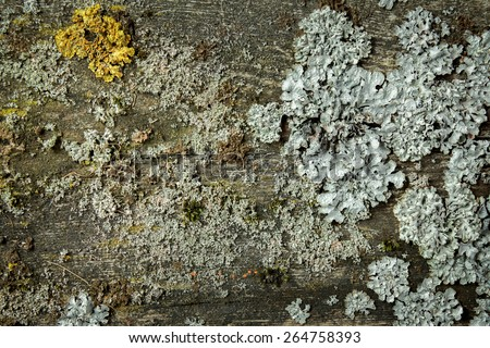 Moss and lichens on wood background - stock photo