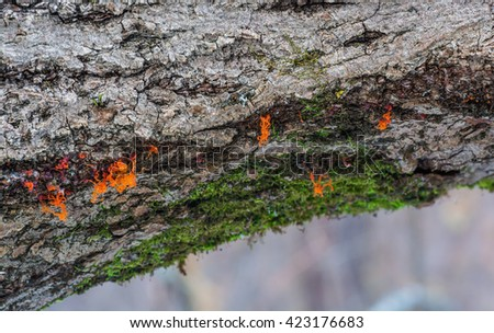 Moss and orange mushrooms growing on a tree - stock photo