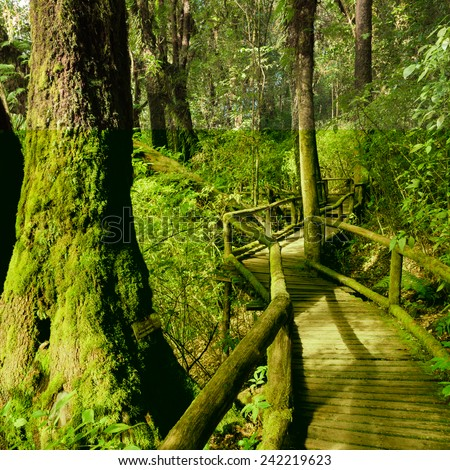 Moss and wooden footpath at the evergreen forest - stock photo