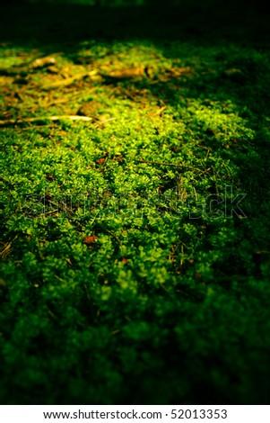 Moss carpet - stock photo