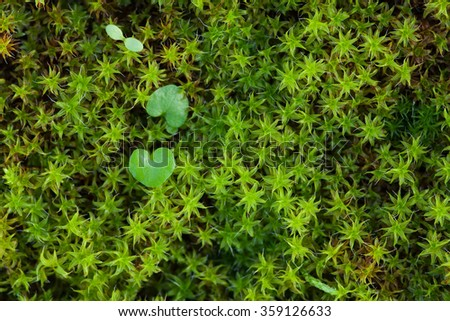Moss close up with heart shape plants - stock photo