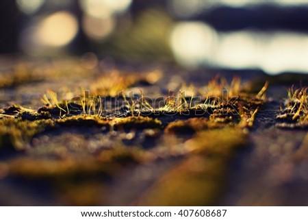 moss closeup - stock photo