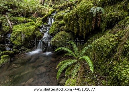 Moss covered rocks in rain forest in Washington. - stock photo