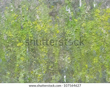 Moss growing on ancient cathedral wall - stock photo