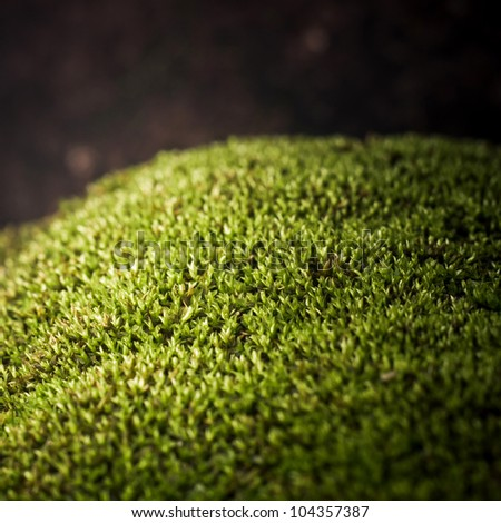 Moss In Close-up Shot - stock photo