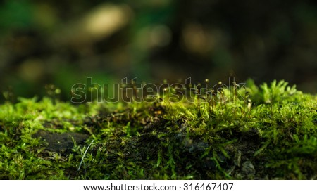 Moss in the forest. Selective focus. - stock photo