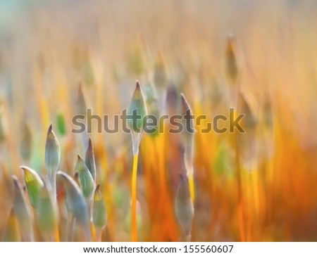 moss in wood - stock photo