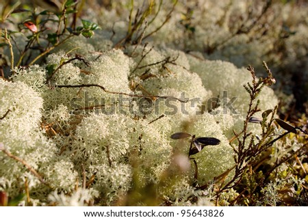 Moss on hummock in sunny day - stock photo