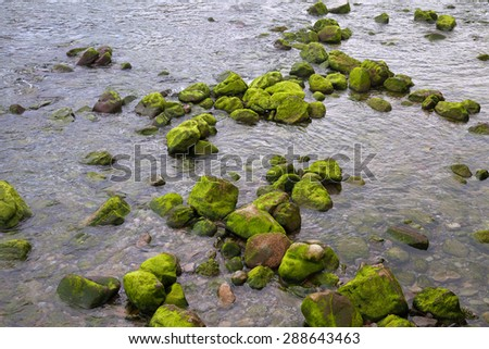 Moss on the stones in river. - stock photo