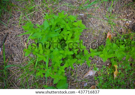 Moss plant and little plant on the floor - stock photo