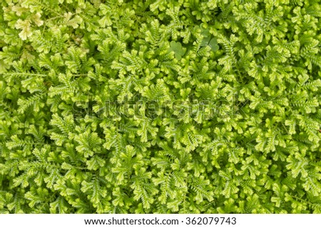 moss tree trunk in the forest - stock photo
