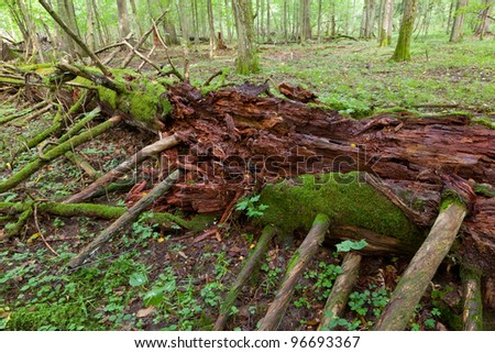 Moss wrapped part of broken tree lying - stock photo
