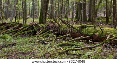 Moss wrapped part of giant tree lying in stand of Bialowieza Forest - stock photo