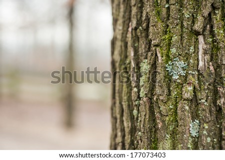 Mossy bark surface with blurred forest background - stock photo