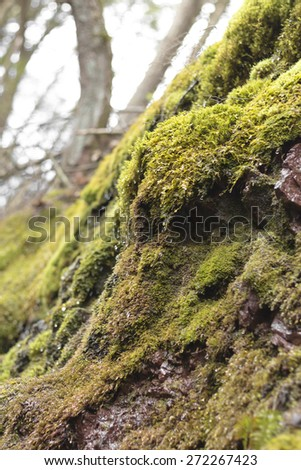 Mossy dripping wet cliff deep in the forest daylight - stock photo