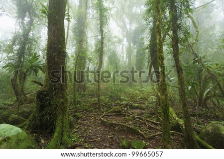 Mossy, humid australian rain forest enveloped in clouds. - stock photo