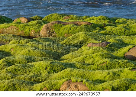 Mossy rocks at a beach - stock photo