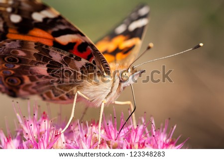 Moth Face - stock photo
