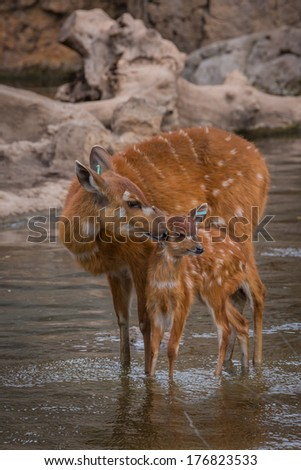 Mother and baby deers - stock photo