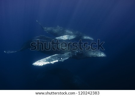 Mother and calf humpback whales swim off the coast of Cabo San Lucas, Mexico - stock photo