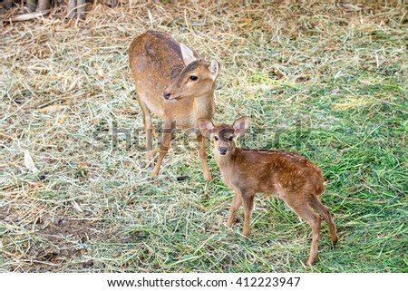 mother and child deer in grass field at zoo - stock photo
