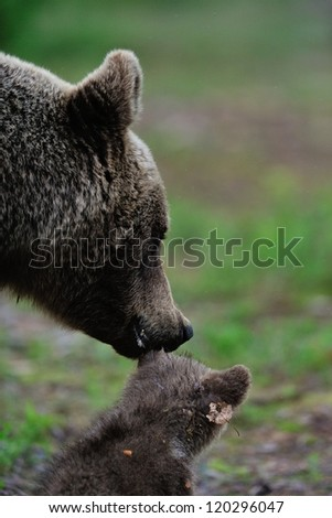 Mother bear with cub - stock photo