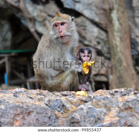 Mother carrying baby monkey - stock photo