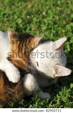 Mother cat and her kitten playing - stock photo
