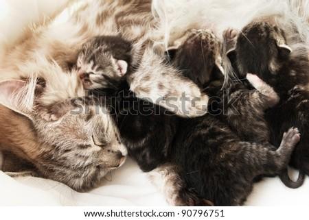 Mother cat and her newborn kittens - stock photo