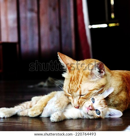 Mother cat cleans her kitten, soft focus - stock photo