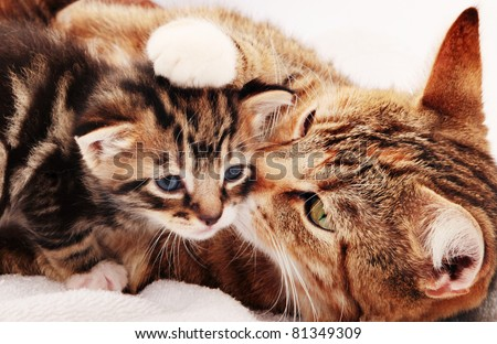 Mother cat licking little kitten's face - stock photo
