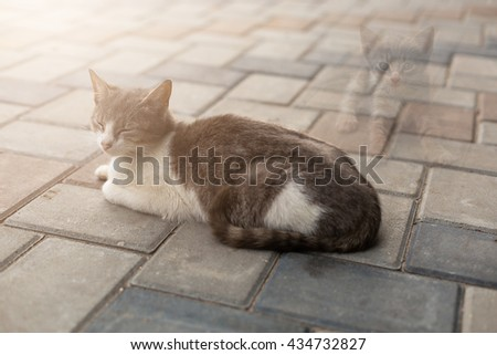 Mother cat  thinking about her kitten - stock photo