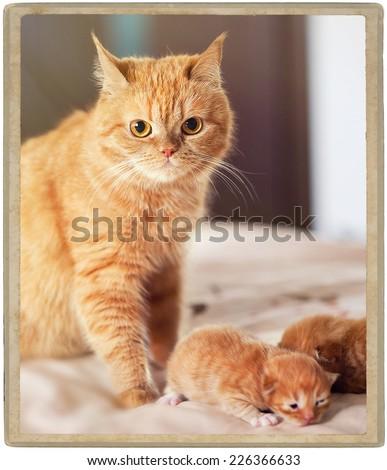 mother cat with kitten newborn  - stock photo