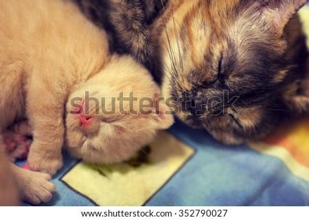 Mother cat with newborn kitten sleeping - stock photo