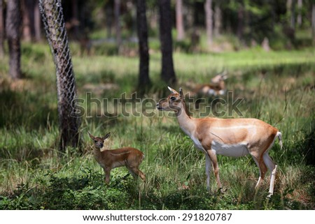 Mother deer and a fawn - stock photo