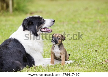 Mother dog sitting with her puppy in the yard - stock photo