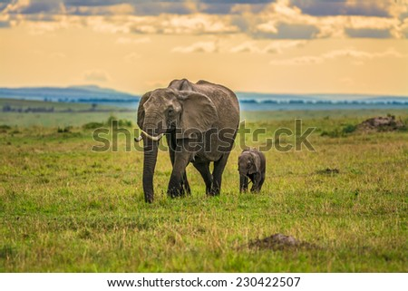 Mother elephant (Loxodonta africana) with a baby, Maasai Mara National Reserve, Kenya - stock photo