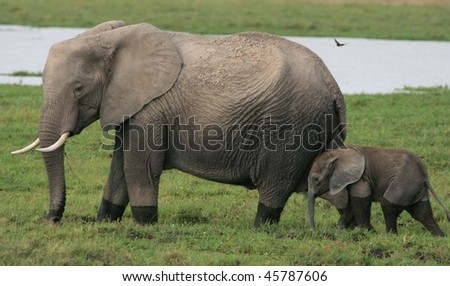 Mother elephant with baby in the African wild - stock photo