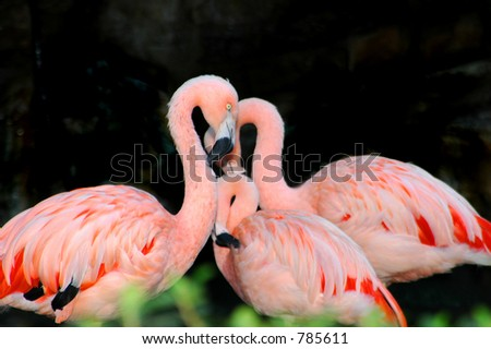 Mother Flamingo and family quiet meditation (family in soft focus). - stock photo