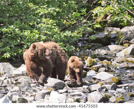 mother grizzly protects cubs - stock photo