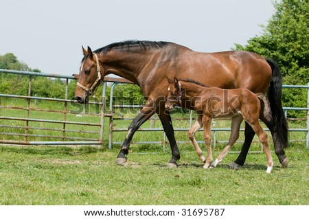 Foal Jumping With Mother Mother Horse And Her Foal in