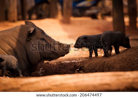 Mother pig and piglet - stock photo