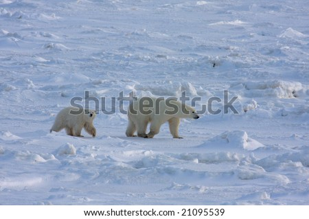 Mother polar bear and her cub in the arctic - stock photo