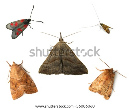 Moths isolated on white - stock photo