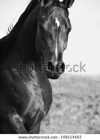 motion portrait of  beautiful  arab. close up - stock photo
