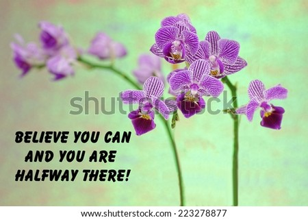 motivational quote about life  with a  beautiful purple orchid on a green background  - stock photo