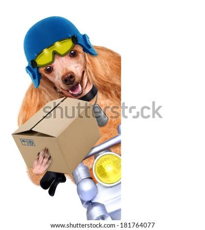 motorbike dog - stock photo