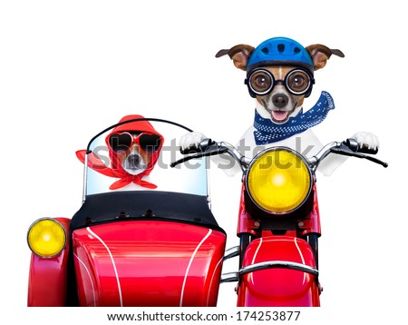 motorbike dogs together in love having a holiday trip - stock photo